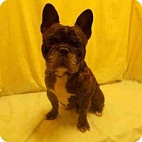 Adopt A Pet :: *STACKZ - Upper Marlboro, MD