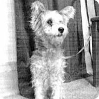 Adopt A Pet :: Meeka - Spokane, WA