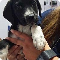 Adopt A Pet :: Rory - Livonia, MI
