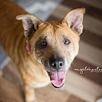 Carolina Dog Mix Dog for adoption in Burlington, North Carolina - Minerva