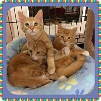 Adopt A Pet :: Odelia - Atco, NJ