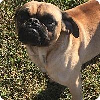 Adopt A Pet :: Major - Essington, PA
