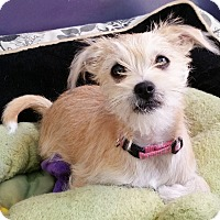 Adopt A Pet :: Annie - Thousand Oaks, CA
