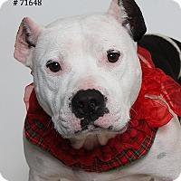 Adopt A Pet :: Frankie  (Foster Care) - Baton Rouge, LA