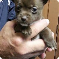 Adopt A Pet :: Rame - Alexandria, VA