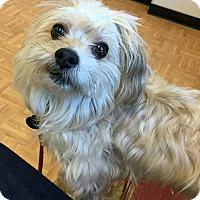 Adopt A Pet :: Rabbit - Oak Park, IL