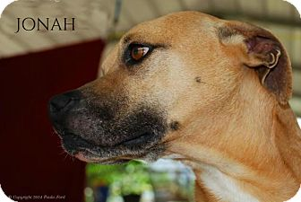 Boxer Mix Dog for adoption in Columbia, Tennessee - Jonah