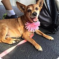 Adopt A Pet :: Bebe - Cincinnati, OH