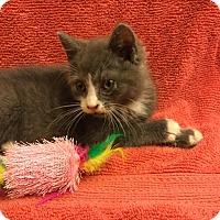 Adopt A Pet :: Petrie - Sykesville, MD