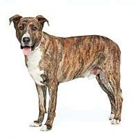 Adopt A Pet :: Huckleberry - Courtesy Post - Encino, CA