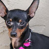 Adopt A Pet :: Nala - Phoenix, AZ
