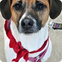 Adopt A Pet :: Waddles - Fairfax Station, VA