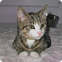 Adopt A Pet :: Otto - Shelton, WA