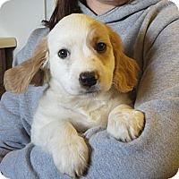 Adopt A Pet :: Damon - Greenville, RI