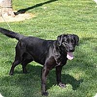 Adopt A Pet :: Emma - Lewisville, IN