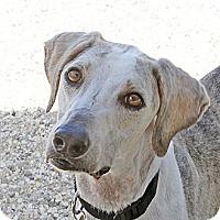 Adopt A Pet :: Henry - Santa Rosa, CA