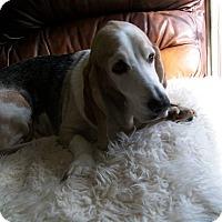 Adopt A Pet :: Emory - Columbia, SC