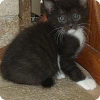 Adopt A Pet :: LUIGI - Acme, PA