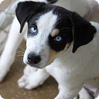 Adopt A Pet :: *Skye - PENDING - Westport, CT