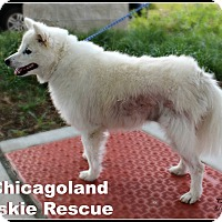 Adopt A Pet :: Channey - Elmhurst, IL