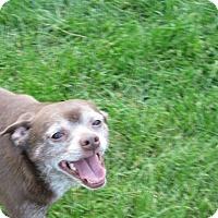 Adopt A Pet :: Sarge - Buffalo, WY