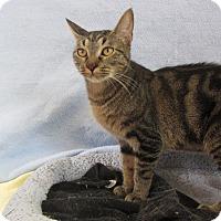 Adopt A Pet :: Shiva - Ridgway, CO