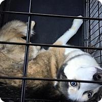 Adopt A Pet :: Holmes - Zanesville, OH