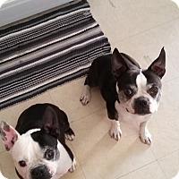 Adopt A Pet :: Bert & Ernie - Huntington Beach, CA