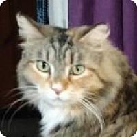 Adopt A Pet :: Leslie - Medford, MA