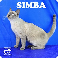 Adopt A Pet :: Simba - Carencro, LA