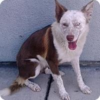 Adopt A Pet :: Fiona - Vacaville, CA