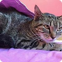 Adopt A Pet :: Missy - Hudson, NY