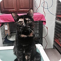 Adopt A Pet :: Sabrina at Madison Heights - Warren, MI