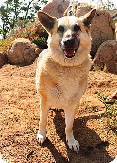 German Shepherd Dog Dog for adoption in San Diego, California - Smokey