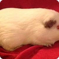 Adopt A Pet :: Casper - Williston, FL