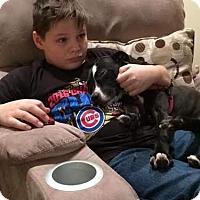 Adopt A Pet :: Clarisse - Villa Park, IL