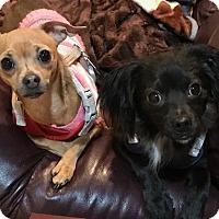 Adopt A Pet :: Della - Prole, IA