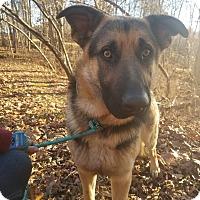 Adopt A Pet :: Rex II - Louisville, KY