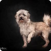 Adopt A Pet :: Nacho - Palmdale, CA