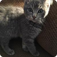 Adopt A Pet :: Emmett C1665 - Shakopee, MN