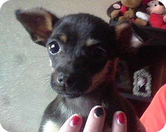 Pixie | Adopted Puppy ...