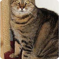 Adopt A Pet :: Dude - Victor, NY