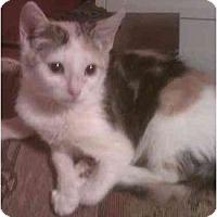 Adopt A Pet :: Lilly - Bartlett, TN