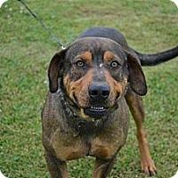 Adopt A Pet :: Smiley - Des Plaines, IL