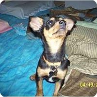 Adopt A Pet :: Bitsy - Andrews, TX