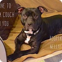 Adopt A Pet :: Nelly - Reisterstown, MD