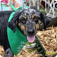 Adopt A Pet :: Ranger - Alpharetta, GA