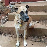 Adopt A Pet :: Joe - Norcross, GA