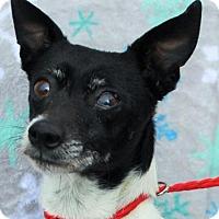 Adopt A Pet :: SID-Senior for a Senior? - Red Bluff, CA