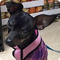 Adopt A Pet :: Winnie - Foster Needed - North Olmsted, OH